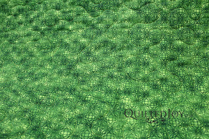 green backing